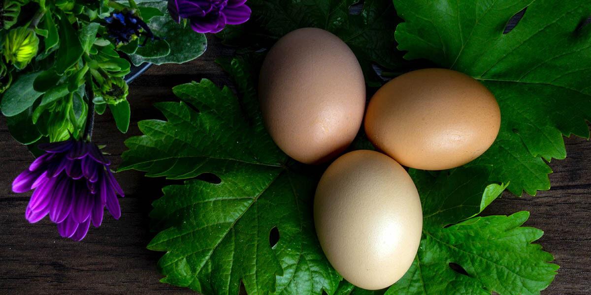 Do Hard Boiled Eggs Go bad