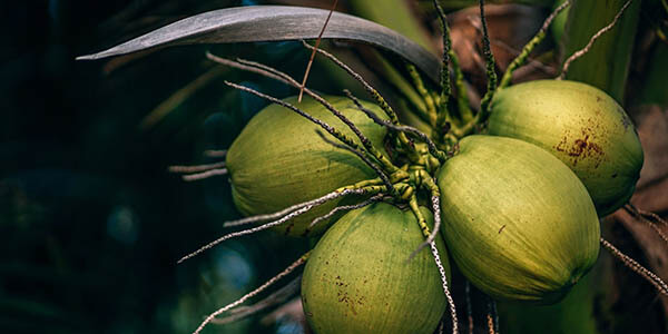 How To Store Coconut Water