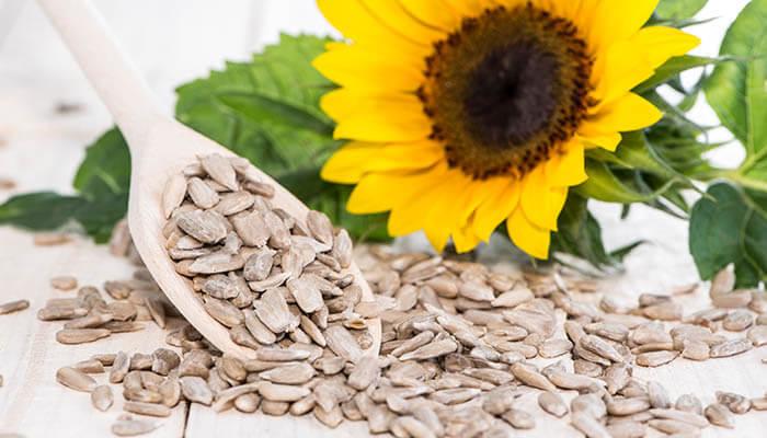 How Long Do Sunflower Seeds Last